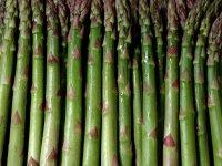 asparagus-drop-background-fresh-herbs-1035797-wallhere.com