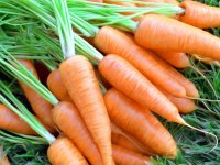 carrots-ripe-grass-1022330-wallhere.com (1)