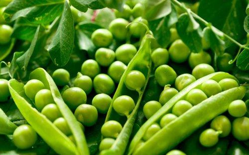green-peas